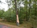 ffw-bäume-(10)