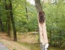 ffw-bäume-(13)