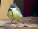 Vogelkind3