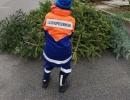Jugendlicher-zieht-Tannenbaum