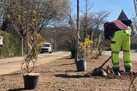 Weinheim: Eine Weide für die Insekten