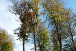 HessenForst zieht eine Bilanz der Käfersaison –  Borkenkäfer überwintern im Boden