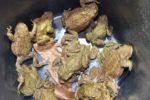 Freiwillige retten Kröten rund um den Anglersee