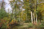 STADTRADEL-Tour Viernheimer Wald