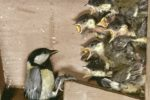 Ein Eigenheim für Vögel – der Nistkasten