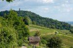 Weinheim: Rauf auf den Burgensteig  Sportliches Wandern an der Bergstraße und gewinnen von März bis Oktober – 25 Anlaufstellen mit QR-Codes