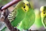 Der Vogelpark Viernheim öffnet am Montag den 8. März wieder seine Pforten